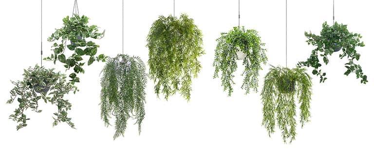 kunstpflanzen kunstgr ser hochwertige kunstblumen. Black Bedroom Furniture Sets. Home Design Ideas