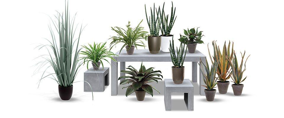 dekoflower hochwertige kunstpflanzen kunstpalmen. Black Bedroom Furniture Sets. Home Design Ideas