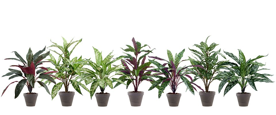 kunstpflanzen wie echt kunstgr ser k nstliche orchideen. Black Bedroom Furniture Sets. Home Design Ideas