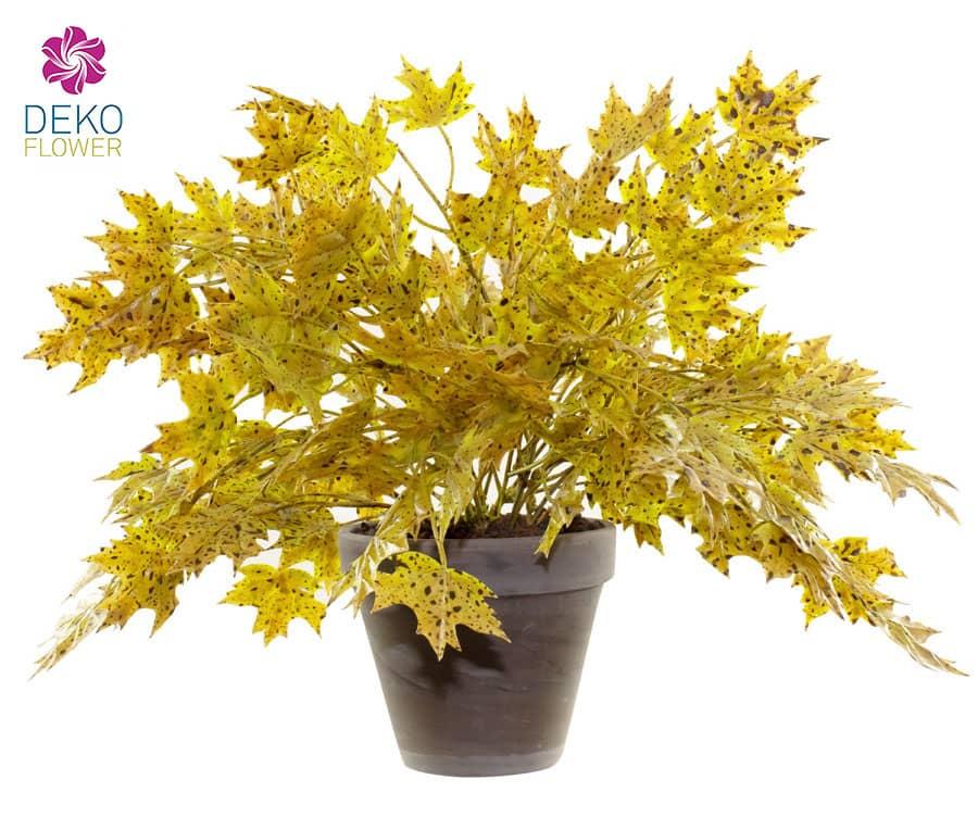 Ahornbusch gelbgrün 32 cm