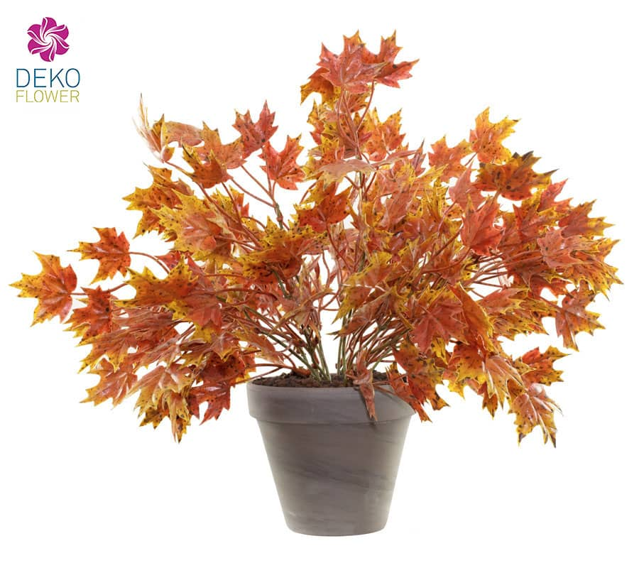 Ahornbusch orange 32 cm