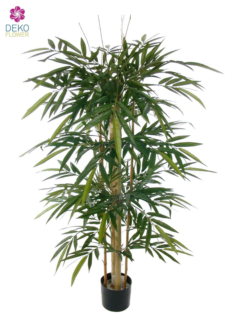 Bambusbaum mit dicken Stämmen 160 cm