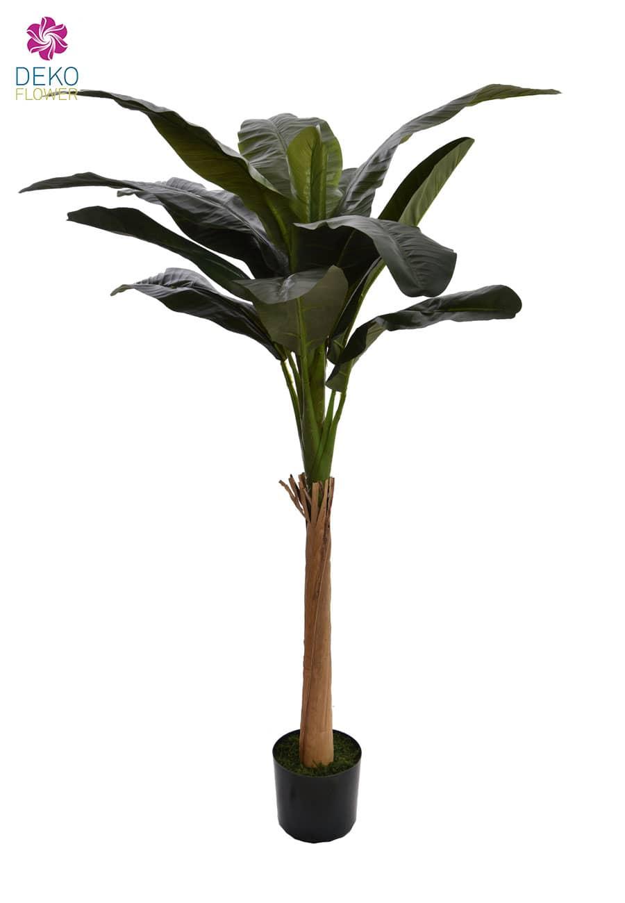 Bananenpalme 180 cm grün