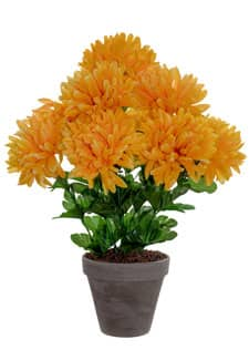 Chrysanthemen gelb im Topf 45 cm