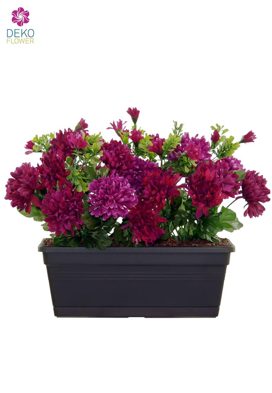 chrysanthemen weinrot pink im balkonkasten 31 cm. Black Bedroom Furniture Sets. Home Design Ideas