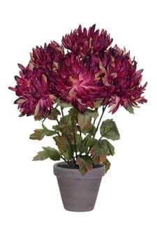 Künstlicher Chrysanthemen im Tontopf weinrot 34cm