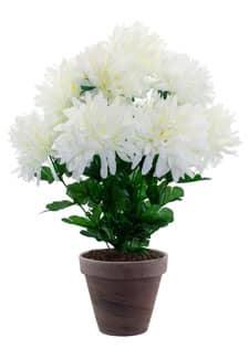 Chrysanthemen weiß 45 cm getopft