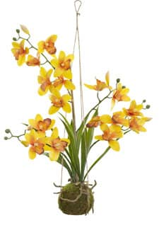 Cymbidium hängende Orchidee gelb 63 cm