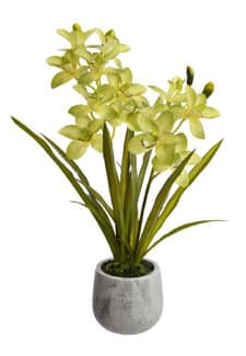 Cymbidium Orchidee »Real Touch« 69 cm grün