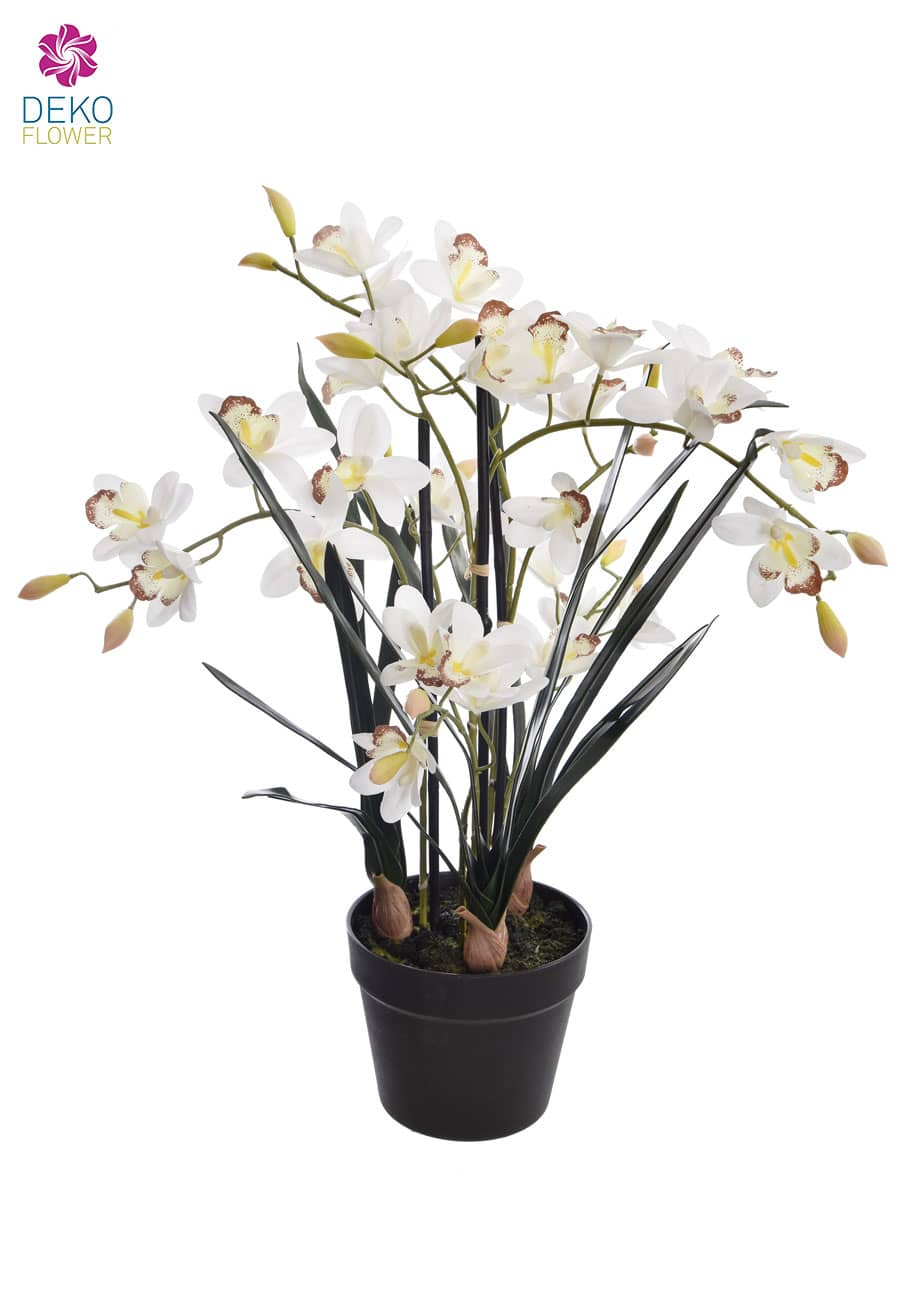 Cymbidium Orchidee »Real Touch« weiß 66 cm