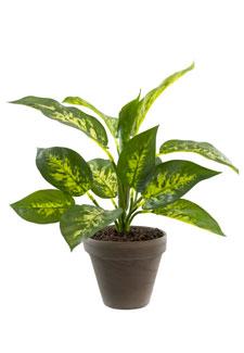 Dieffenbachie Kunstpflanze 35 cm grün gelb
