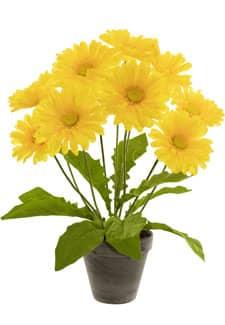Gerbera Topfpflanze gelb 49 cm