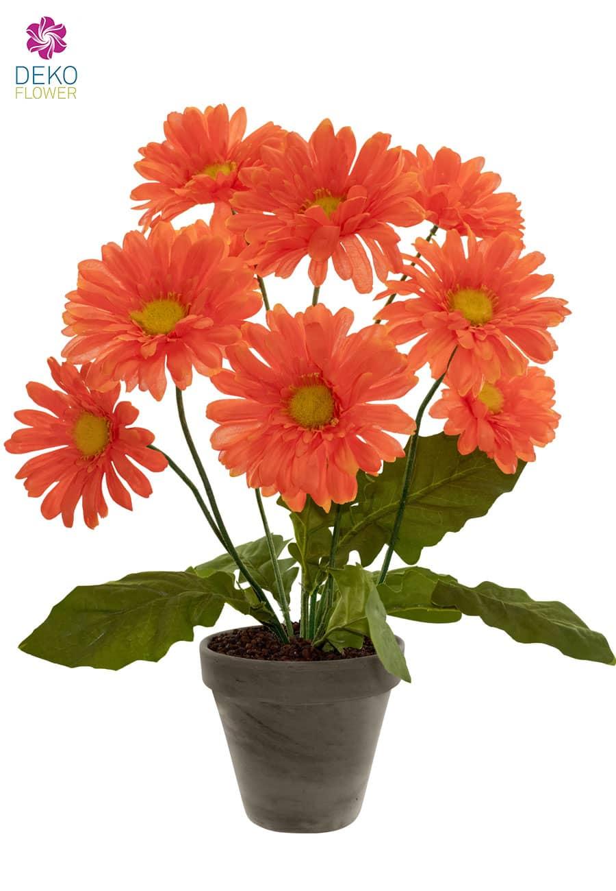 Gerbera Topfpflanze orange 49 cm