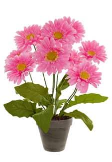 Gerbera Topfpflanze rosa 49 cm