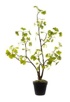 Ginkgo Kunstpflanze im Topf 70 cm