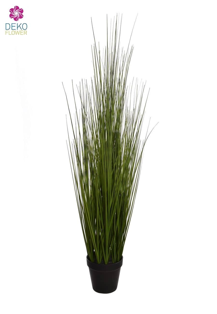 Gras »Safari« in grün 89 cm getopft