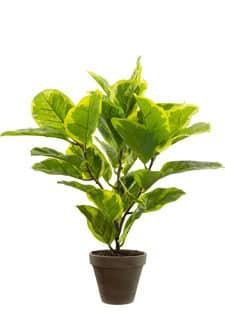 Gummibaum Kunstpflanze grün gelb 58 cm