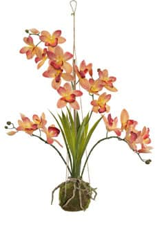 Hängende Cymbidium Orchidee orange 63 cm