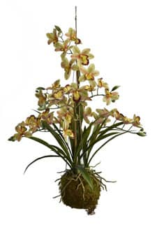 Hängende Orchidee Cymbidium grün 80 cm