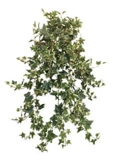 Holland Efeu-Ranke mit 490 Blatt 70cm