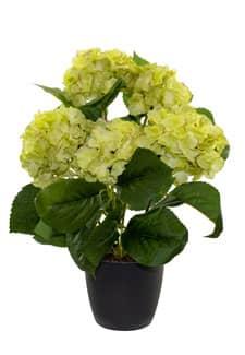 Hortensien künstlich grün 43 cm