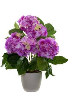 Hortensien Kunstpflanze rosa 43 cm