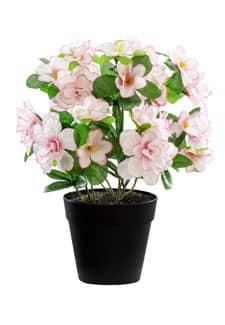 Künstliche Azaleen weiß rosa 25 cm
