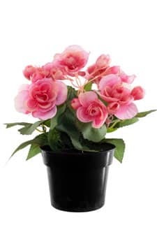 Künstliche Begonien Topfblumen pink 22 cm