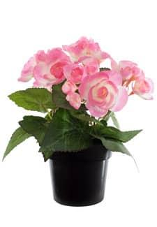 Künstliche Begonien Topfblumen rosa 22 cm