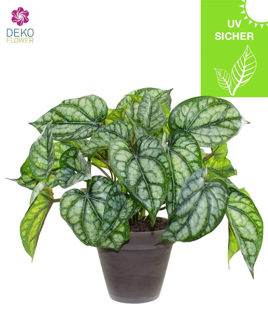 Künstliche Calathea grün 30 cm