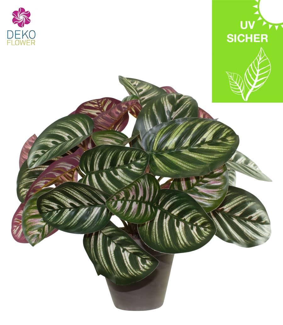 Künstliche Calathea Pflanze 30 cm