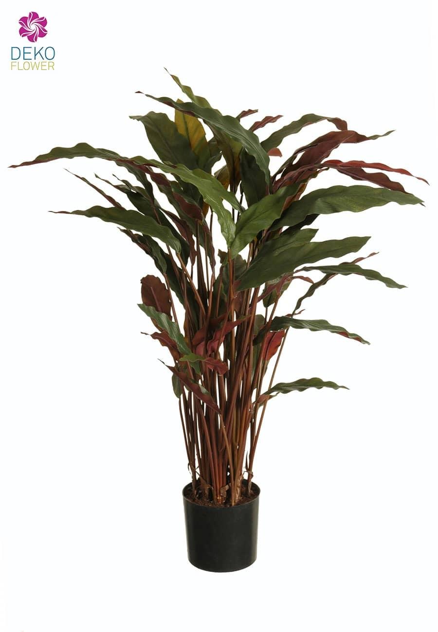 Kunstpflanze Calathea rot 82cm