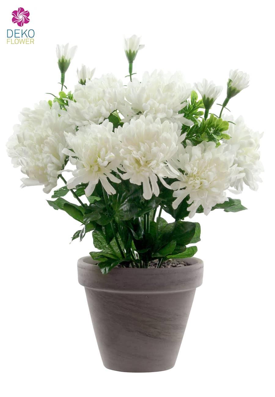 Chrysanthemen weiß 29 cm im Topf