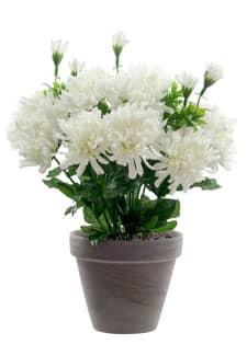 Künstlicher Chrysanthemen Busch creme-weiß 29cm im Tontopf