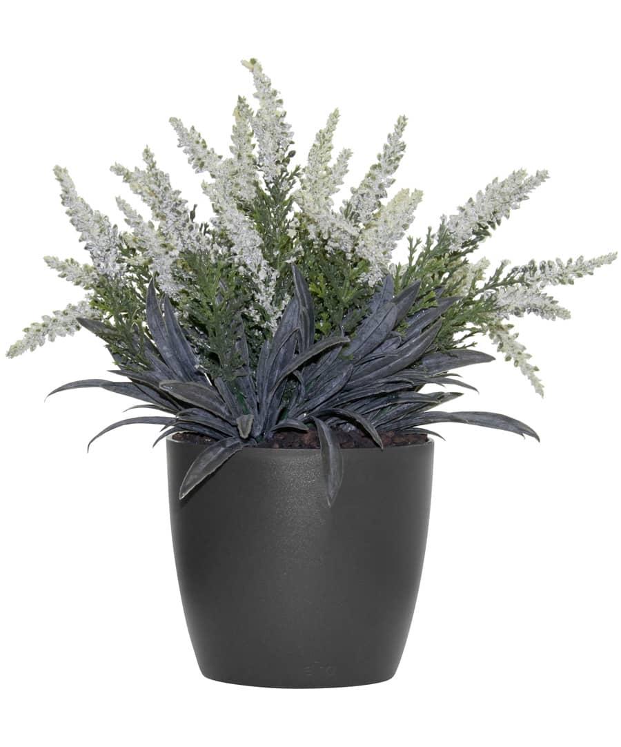 kunstpflanzen k nstliche erika pflanze creme 24cm getopft. Black Bedroom Furniture Sets. Home Design Ideas