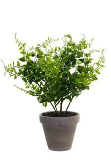 Künstliche Farnpflanze 35cm