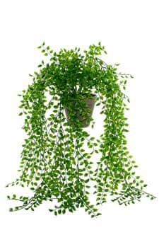 Künstliche Ficus Repens Ranke im Tontopf 80cm grün