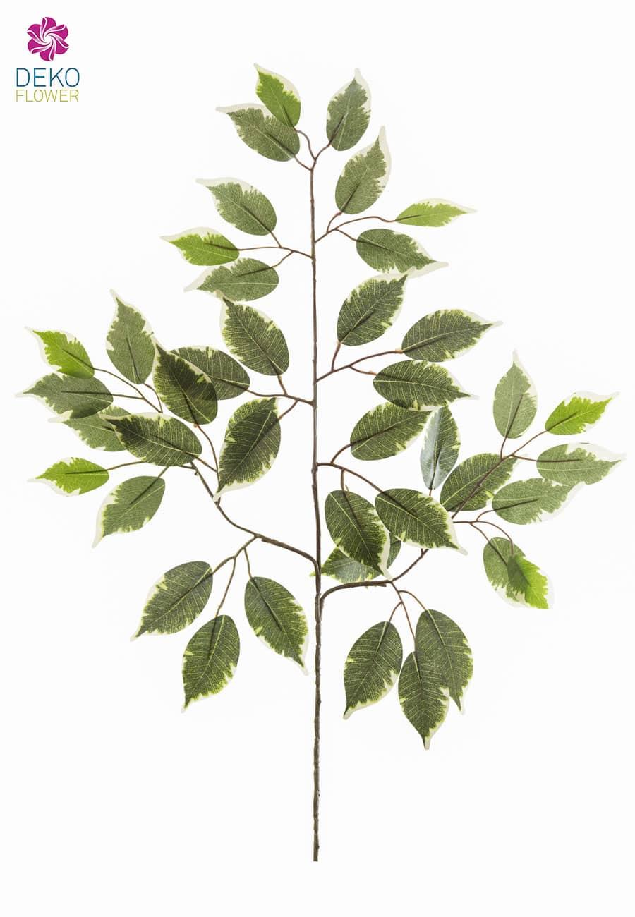 Dekozweige »Ficus Benjamini« grün creme 12er-Pack