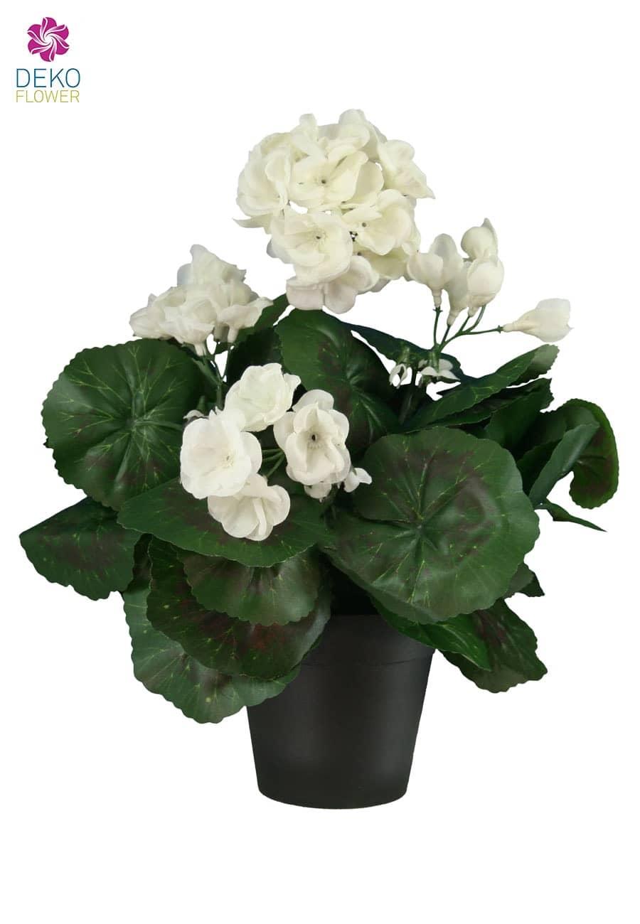 lilien im topf lilien pflanzen lilien pflanzen biorhythmuskalender lilien kaufen lilien strau. Black Bedroom Furniture Sets. Home Design Ideas