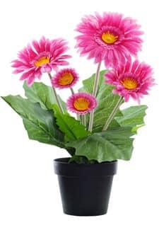 Kunstpflanze Gerbera pink 33cm