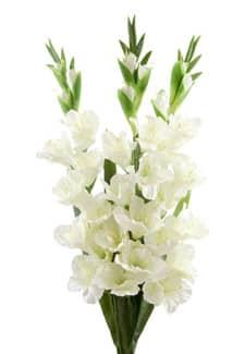 Gladiolen Kunstblumen creme-weiß 100 cm 3er-Set