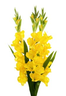 Gladiolen Kunstblumen gelb 100 cm 3er Set