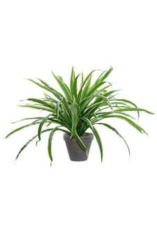 Künstliche Grünlilien Topfpflanze grün creme 48 cm