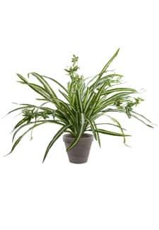 Künstliche Grünlilien Topfpflanze creme grün 46 cm