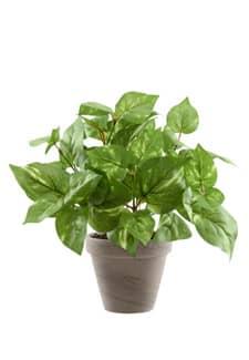 Künstliche Grünpflanze Pothos 34 cm