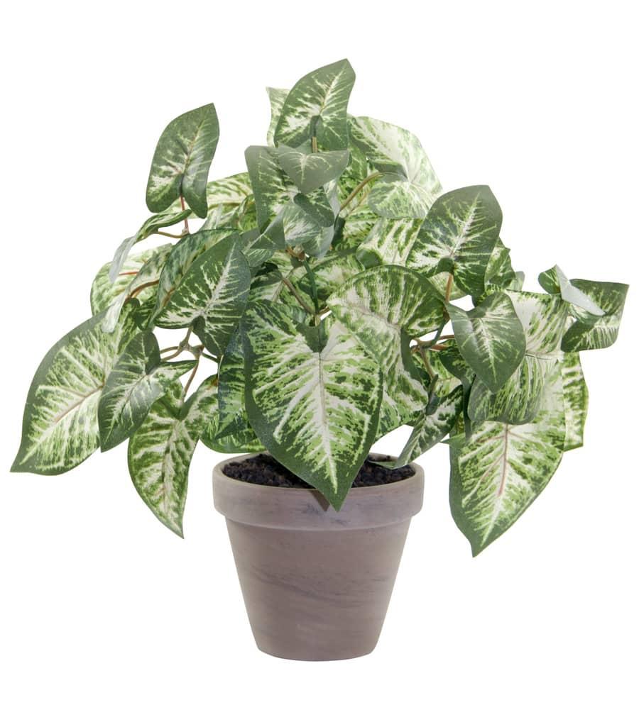 Künstliche Grünpflanze Syngonium 34 cm