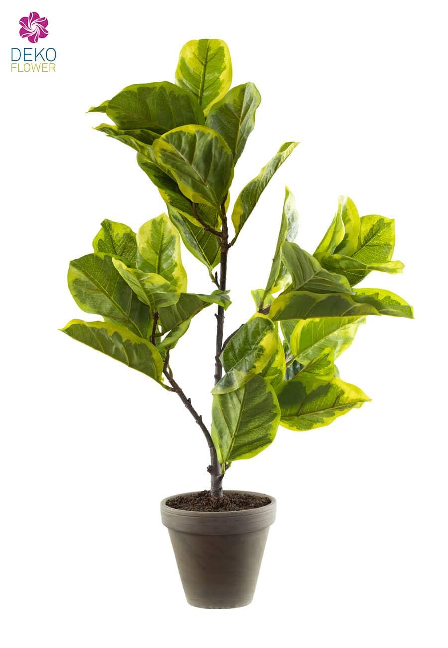 Künstliche Gummibaum Pflanze gelb grün 70 cm