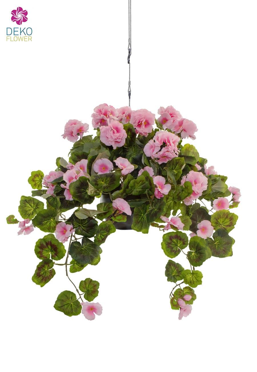 Hängegeranien pink 60 cm in Ampel