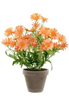 Künstliche Margeriten Topfblumen lachsgelb 39 cm