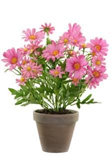 Künstliche Margeriten Topfblumen pink 39 cm
